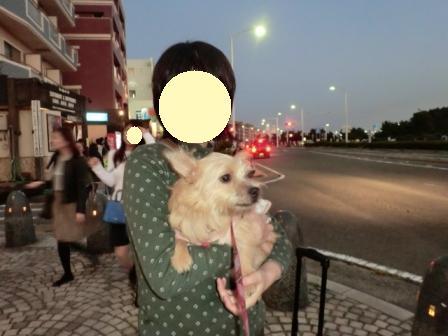 2014-10-18_004_(640x480) チョコ湘南