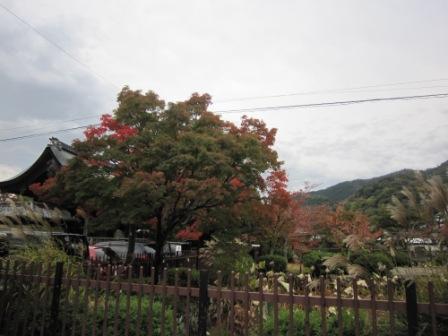 IMG_9237 天龍寺14・11・2