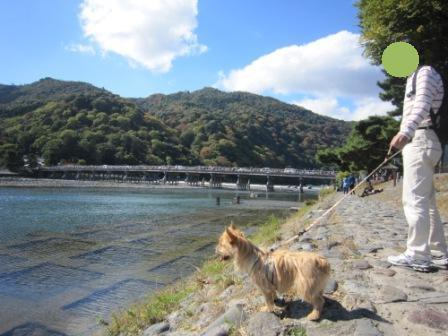 IMG_9301 嵐山14・11・3