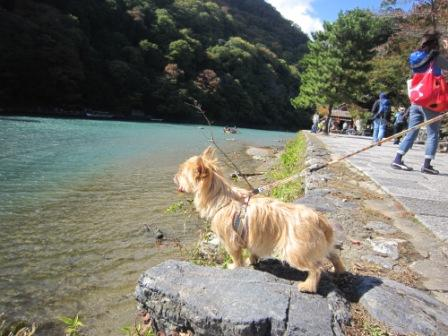 IMG_9308 嵐山14・11・3