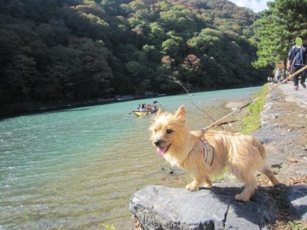 IMG_9312 嵐山14・11・3