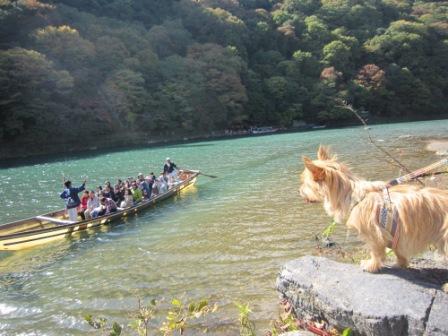 IMG_9314嵐山14・11・3