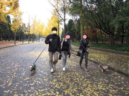 IMG_0046 大阪城公園14・11・29