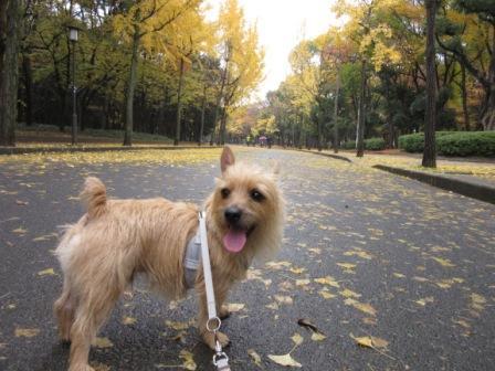 IMG_0047 大阪城公園14・11・29