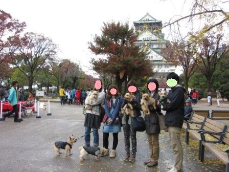 IMG_0067 大阪城公園14・11・29