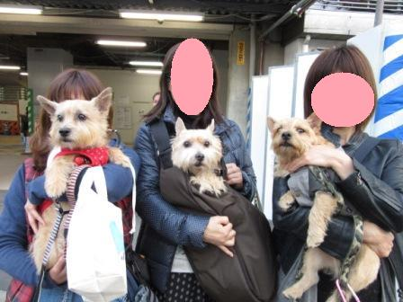 IMG_0077 大阪城公園14・11・29