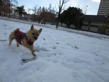 IMG_0281広場雪