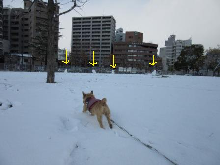 IMG_0286広場雪