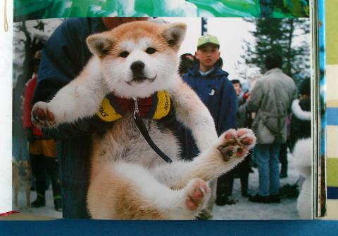 dog1_convert_20121228140722.jpg