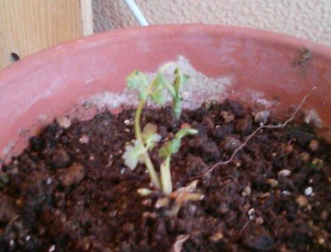 gardening1_convert_20121214230758.jpg