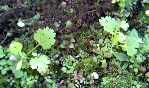 herb2_convert_20121113175423.jpg