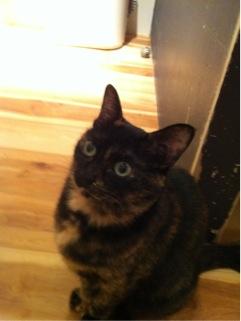 cat901.jpg