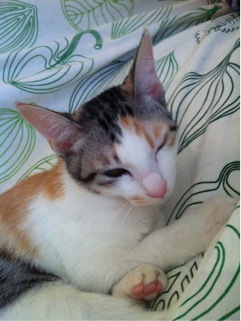 cat903.jpg