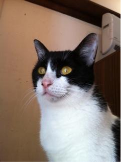 cat904.jpg
