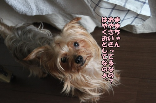 IMG_8195_201409111953302ae.jpg