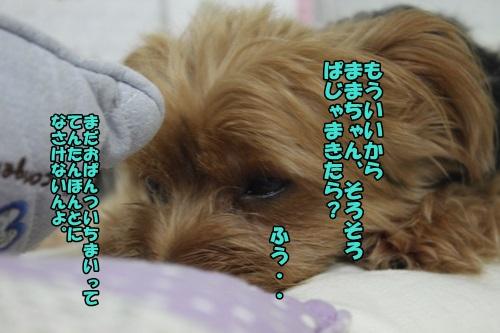IMG_8230_20140913221105120.jpg