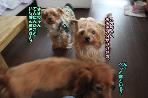 IMG_8245_201409152119218ae.jpg