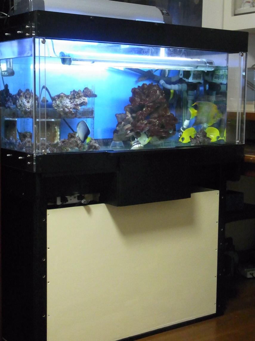 水槽4_20120522
