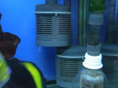 プレフィルター水槽20130130
