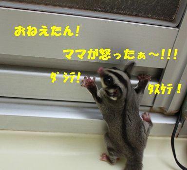 IMG_23931.jpg