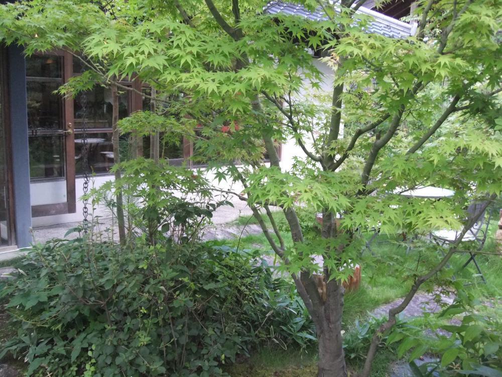 2010夏 大山旅行 025