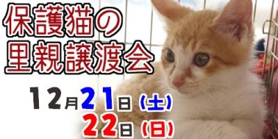 def_2013121916193667b.jpg