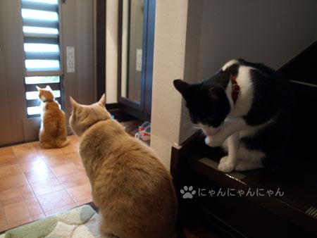 彩風ドア解禁1