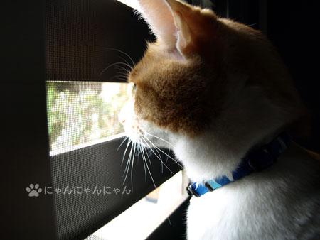 彩風ドア解禁4