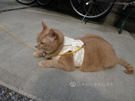 くぅお散歩2