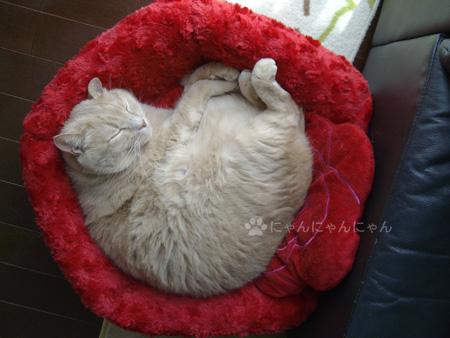 バラのベッドで丸くなる2