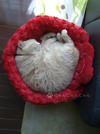 バラのベッドで丸くなる1