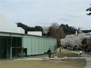 21世紀美術館の桜