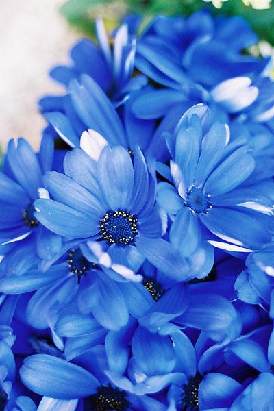 030212flower.jpg