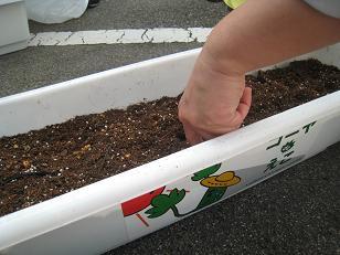 種を植えます
