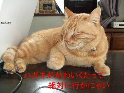 2010_05060072.jpg