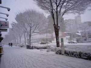 雪の御池通り