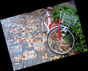 落ち葉と赤い自転車