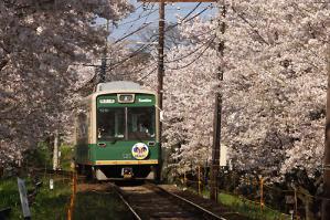 嵐電桜トンネル