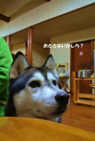 DSC_4760.jpg