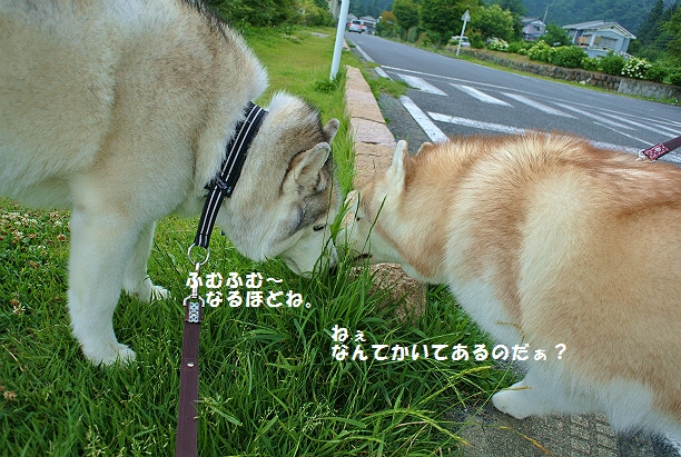 DSC_6218.jpg
