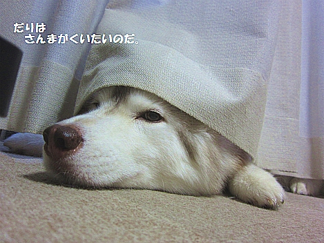 IMG_9102_20110916234916.jpg