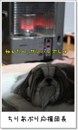 2010_0203_190255AA.jpg