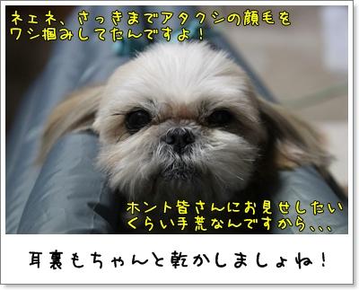2010_0203_191041AA.jpg