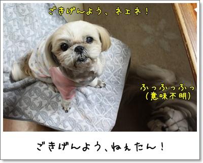2010_0224_192755AA.jpg