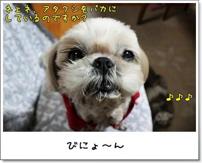 2010_0225_192609AA.jpg