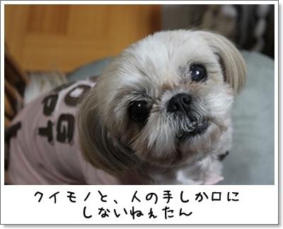 2010_0304_194208AA.jpg