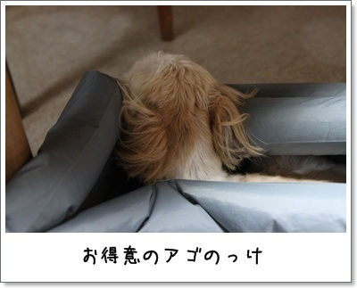 2010_0309_184617AA.jpg