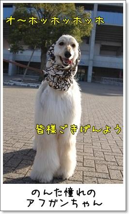 2010_0314_160238AB.jpg