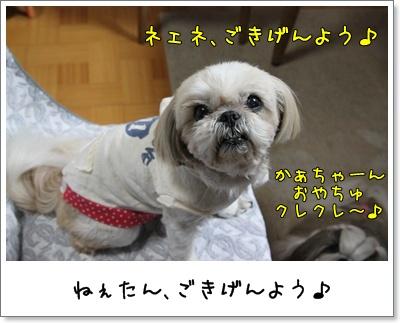 2010_0315_192605AA.jpg