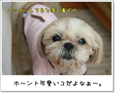 2010_0321_102816AA.jpg